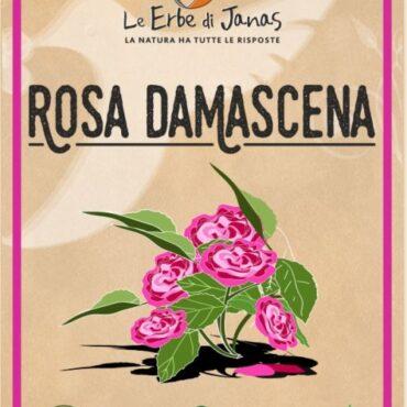 ROSA DAMASCENA LE ERBE DI JANAS
